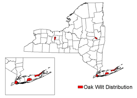 Oak Wilt Map